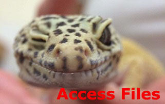 Access Files